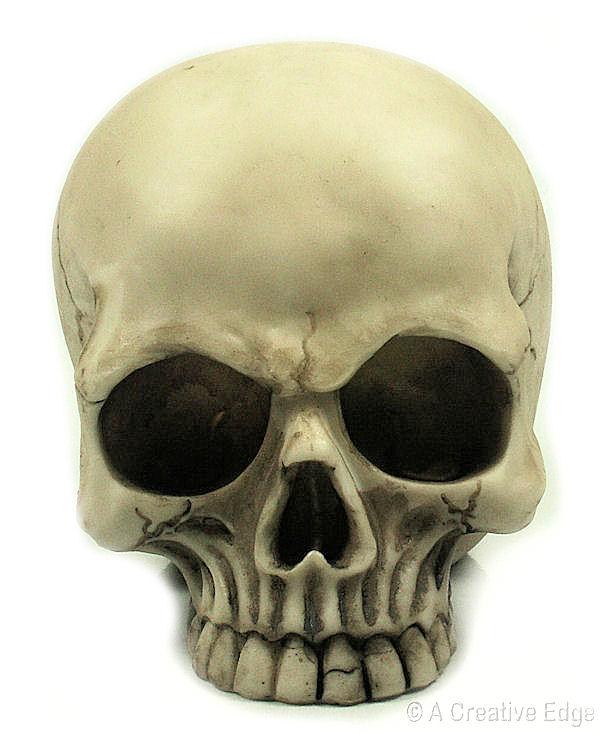 human skeleton skull. Realistic Human Skull Resin